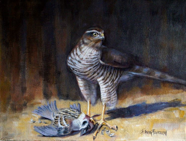 Sparrowhawk (Accipiter nisus) and the prey